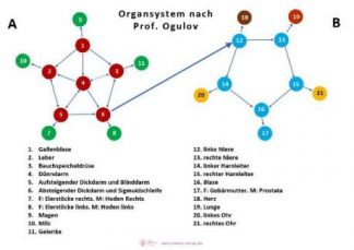 laminierte Tabelle Organsystem