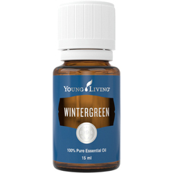 YL Wintergreen